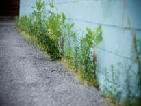 photo of weeds growing up wall